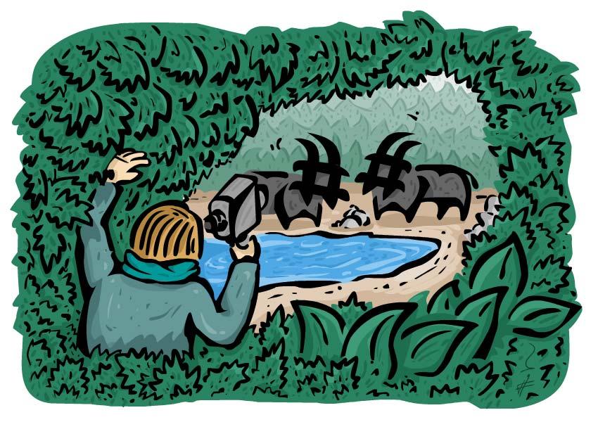 فردی در حال فیلمبرداری از هشتگهایی که لب دریاچه آب میخورند